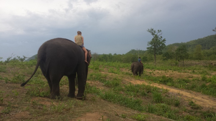 Walking the elephants back to the mountains to let them feed and sleep. They only sleep for five hours!
