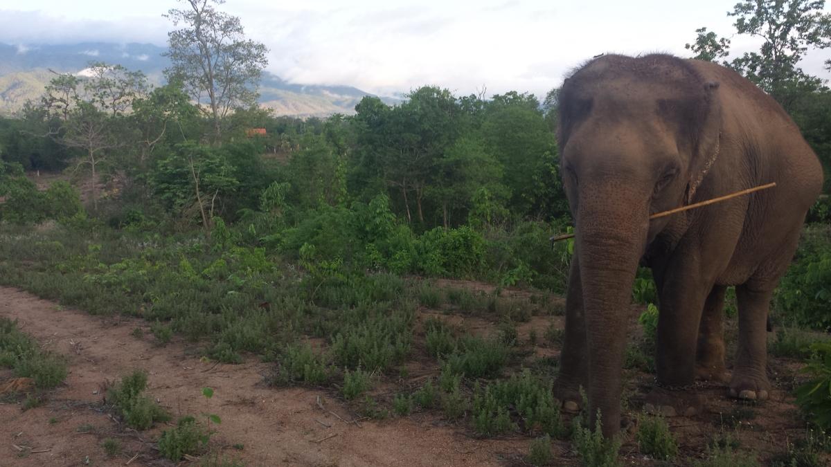 Thom's Elephant Camp! 🇹🇭