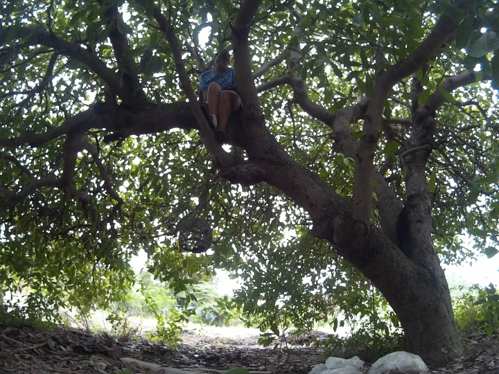 Climbing the cashew nut tree!