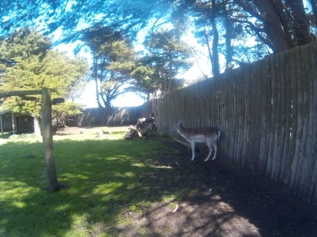 This deer was so shy. I tried my best to feed it but it kept running away.